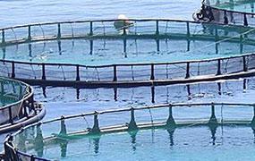 Aquaculture Pro - Aquaculture Industry: News, articles, jobs