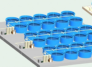 DECOFACC-RS Breeding cycle of water treatment system